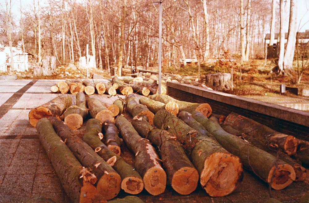 1986 Baumfällung im Kurpark / Malente Archiv